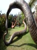 Biggest Snake of the World for Sale, 25 000