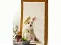 Beverly Hills Chihuahua Anais can Sing Acapella to Se Supones